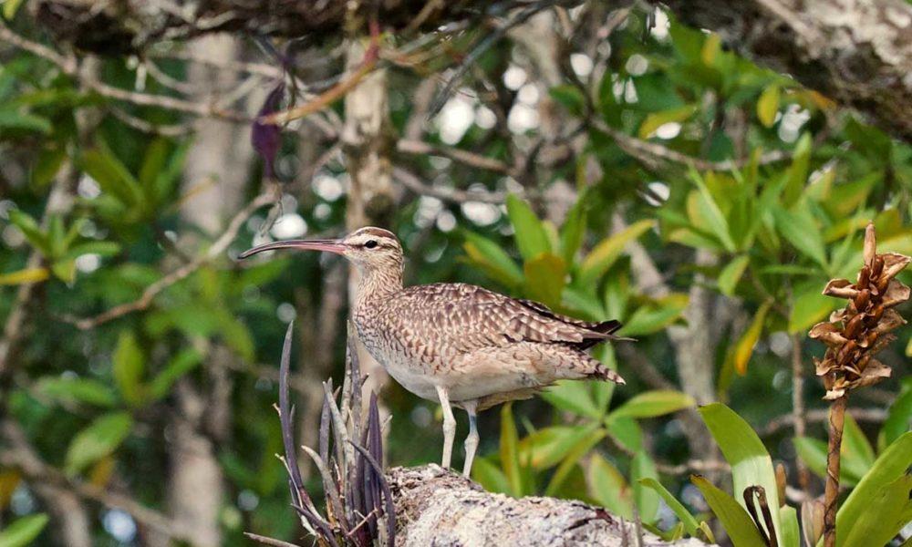 costa-rica-panama-gallery-unmatched-biodiversity_Richard-Patterson